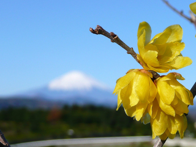 20090101_03_富士山.jpg