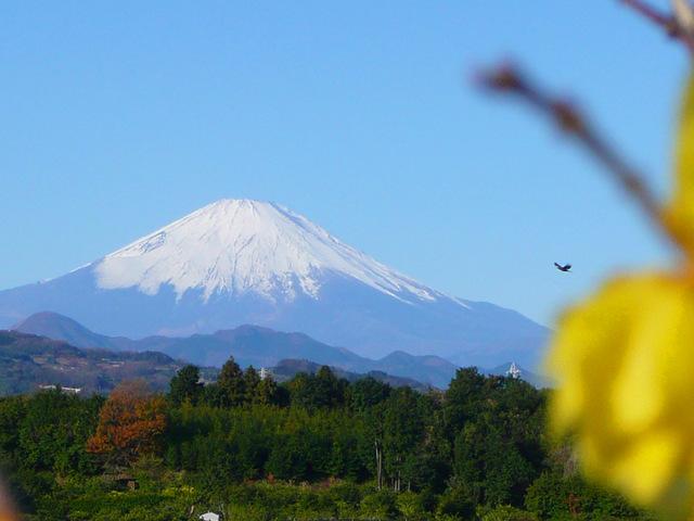 20090101_04_富士山.jpg