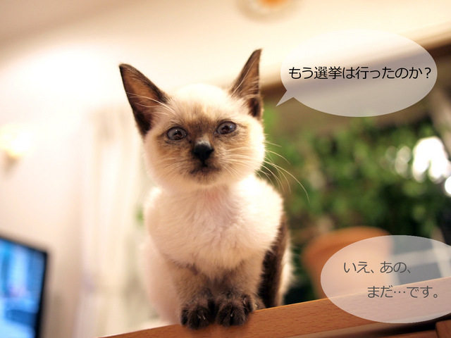 PA163486_杏の選挙へ行こう1.jpg